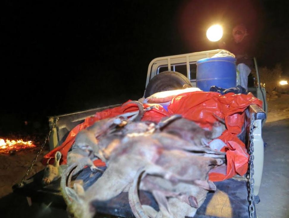 Three hunters arrested for poaching wildlife