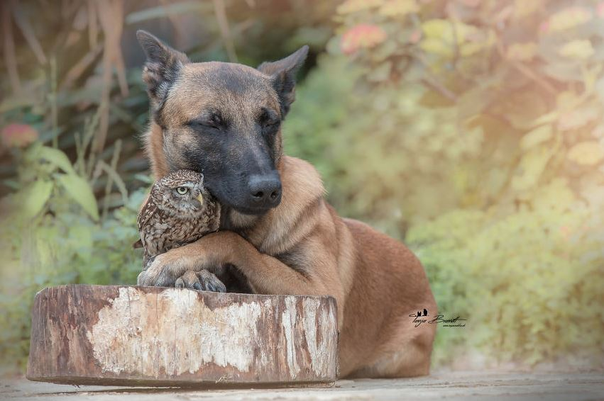 Photos: No he isn't strangling that owl, in fact, they are best friends!