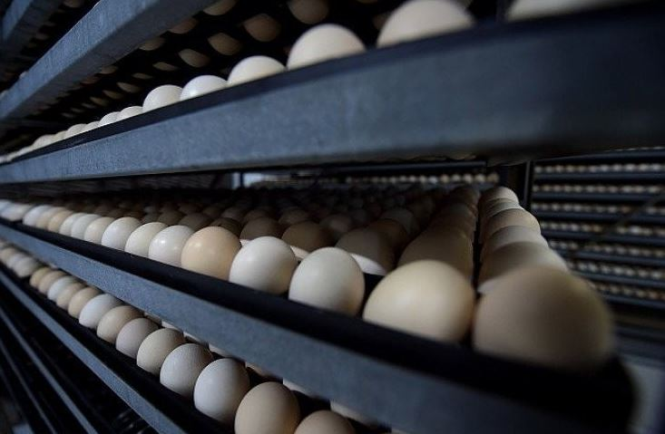 Saudi lifts ban on import of French eggs, chicks