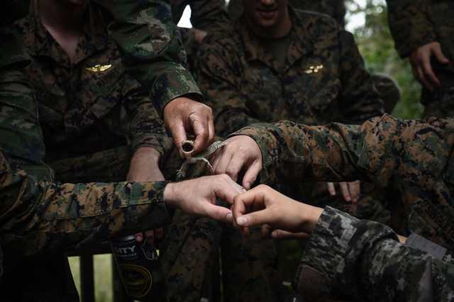 OMG: PHOTOS that will make you flinch: Marines drink cobra blood in US-Thai war games