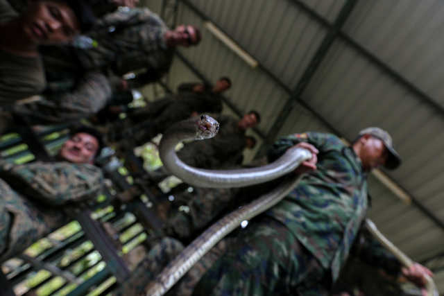 OMG: PHOTOS that will make you flinch: Marines drink cobra blood in US-Thai war games