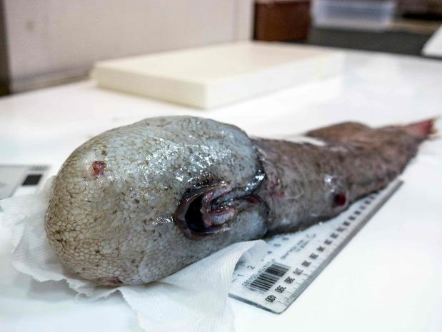 OMG: Kin of 'world's ugliest animal' among fish hauled off Australia abyss