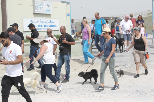 Dog lovers took part in the annual St Patrick's Day Dog Walk yesterday. The event was organised by the Bahrain Society for the Prevention of Cruelty to Animals (BSPCA). The walk began from the Animal Welfare Centre in Askar and participants came with their own dogs as well as took dogs from the shelter. A raffle draw and market stalls were the other highlights of the day. All proceeds will go towards running the shelter and funding activities of the BSPCA.
