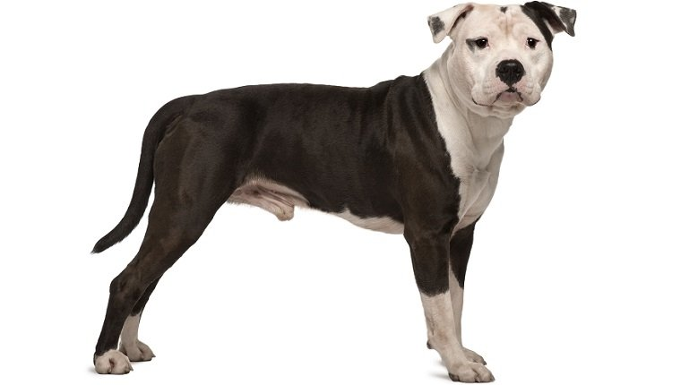Mother and son mauled to death by their Staffordshire terrier