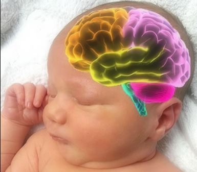Antidepressants in pregnancy tied to changes in babies' brains