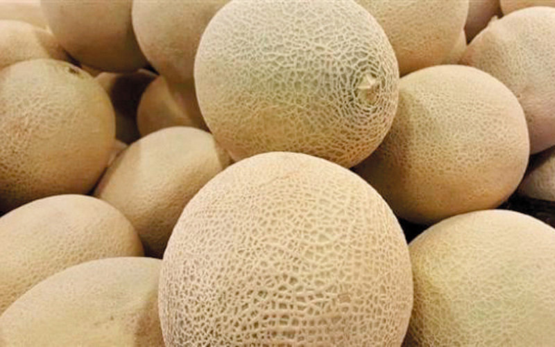 UAE markets free from listeria-contaminated melons