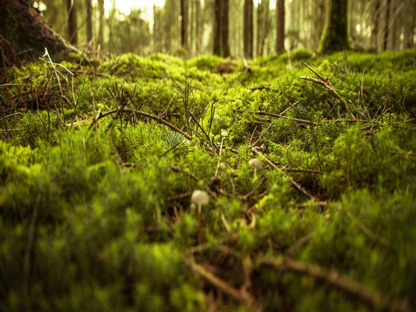 New study says eating moss has many benefits including gut cleansing