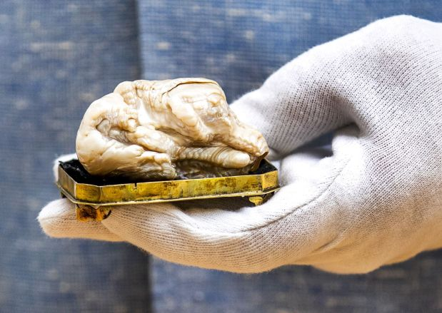 World's largest freshwater pearl goes for 320,000 euros