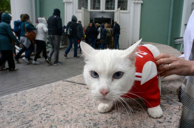 Achilles the Cat, Russia's deaf but highly gifted World Cup soothsayer