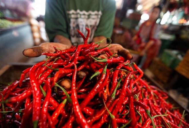 Drug obtained from chilli peppers could help lose weight