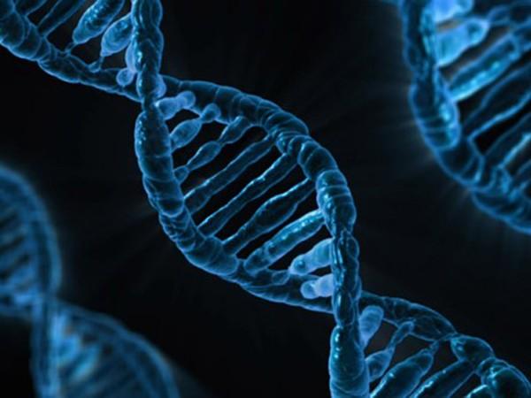 Genes don't affect consumption of calories?