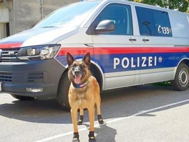World News: Melted asphalt, shoes for dogs...