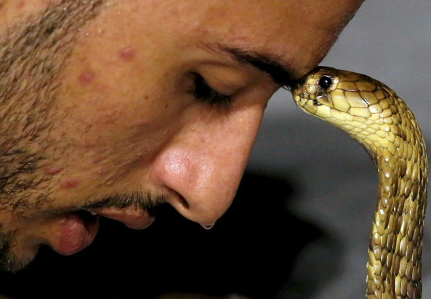 PICTURES: Egyptian in Red Sea resort town charms snakes to sleep