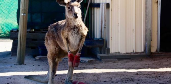 Men wanted for killing and torturing kangaroos in Australia