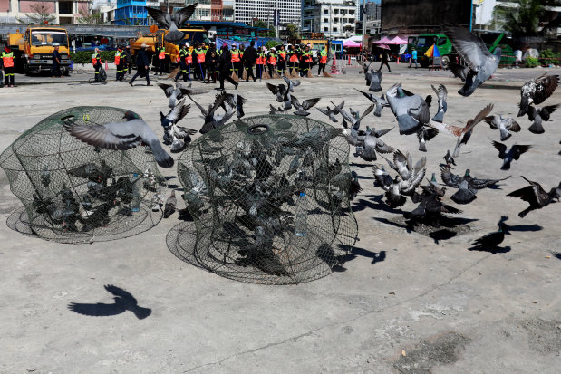 Jail birds: Thailand considers prison for feeding pigeons