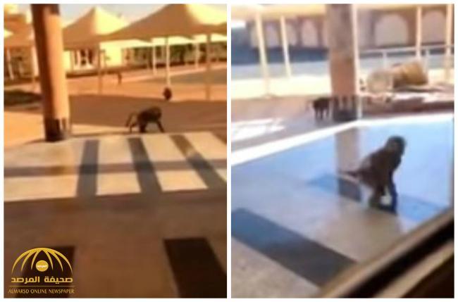 VIDEO: Monkeys spotted inside university of Beesha