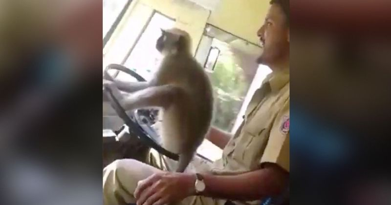 WATCH: Bus driver fired after he allows a monkey to steer a bus full of passengers