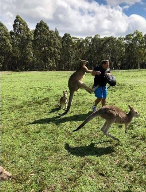 Australia kangaroo attack leaves three hurt