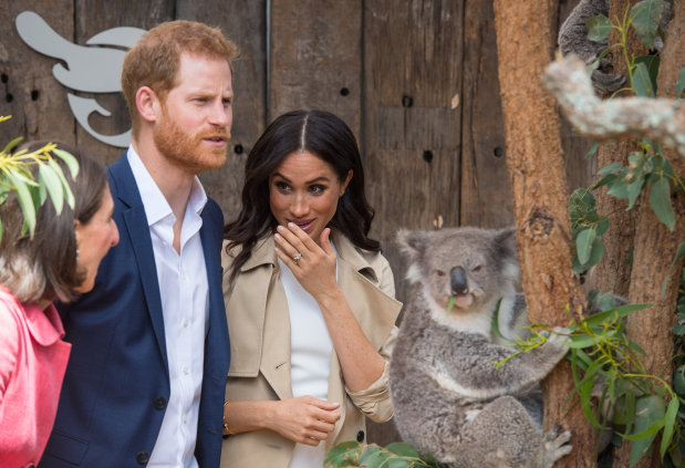 Harry and pregnant Meghan get baby gifts, meet koalas Down Under