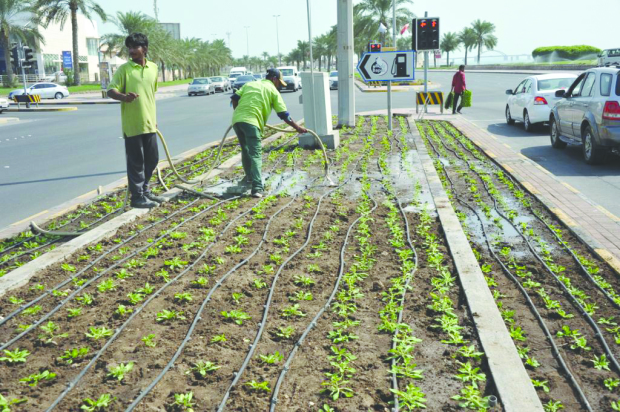 The Muharraq Municipal Council yesterday started planting 200,000 petunias as part of the first stage of its plans to beautify roads and public squares. The seasonal flowers will create green patches along the Airport Road, Khalifa Al Kabir Street, Al Ghous Street and at Prince Khalifa Bin Salman Park.