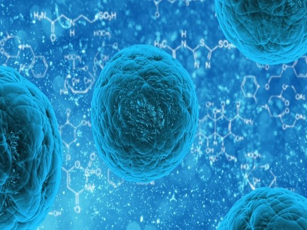 Tumour immune cells can aid cancer therapies: Study