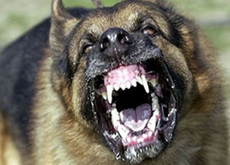 Two Bahraini women mauled by dogs in Kuwait
