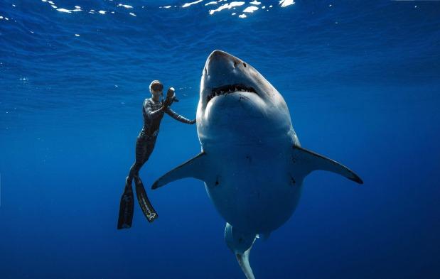OMG: VIDEO: Divers spot giant white shark off Hawaii coast