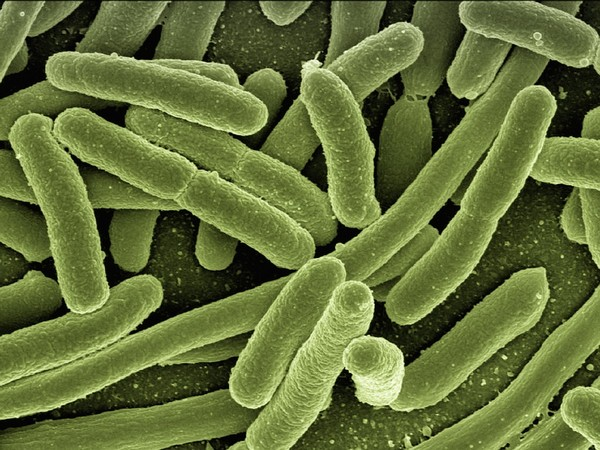 Almost 2,000 bacteria discovered in human gut