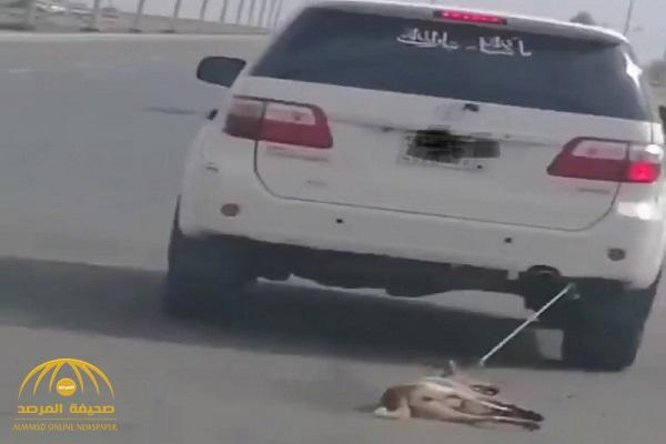 VIDEO: Saudi arrested for tying a dog to his vehicle and dragging it on the streets