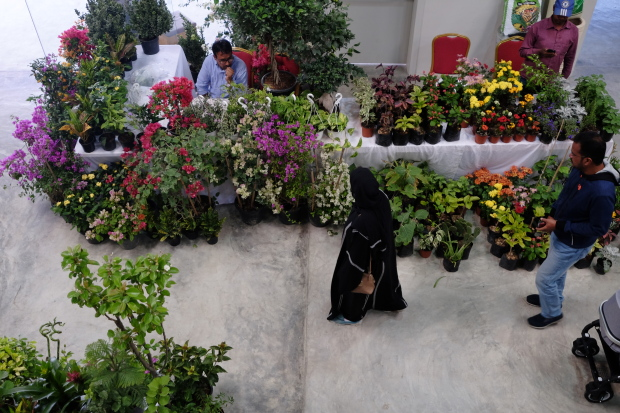 <p>A wide range of colourful flowers on display at the festival.</p>