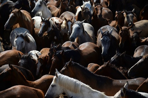 Dutchman sentenced over horse meat scandal arrested in Spain