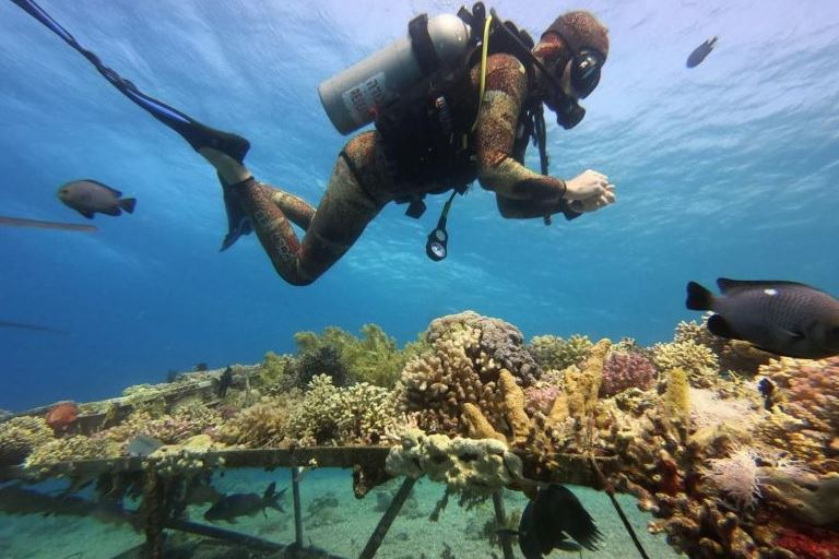 Heatwaves kill coral reefs far faster than thought says study