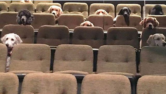 Photo of Canadian service dogs catching 'Billy Elliot' production goes viral