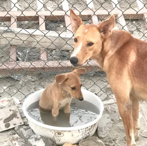 Help urged to feed stray dogs in Askar