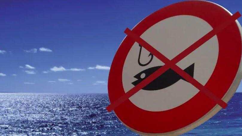 Two-month ban on fishing kingfish