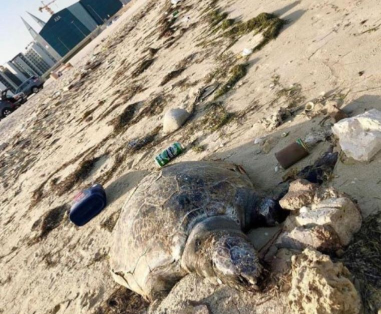 Tough action call over dead turtles