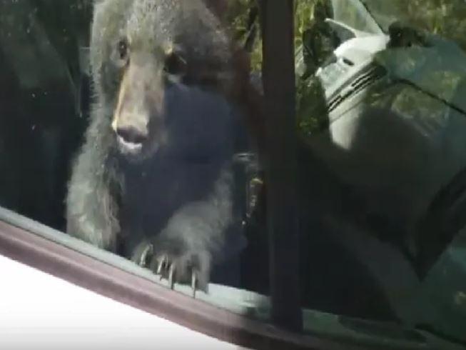VIDEO: Bear cubs 'locked' inside van for 20 minutes rescued after honking horn!