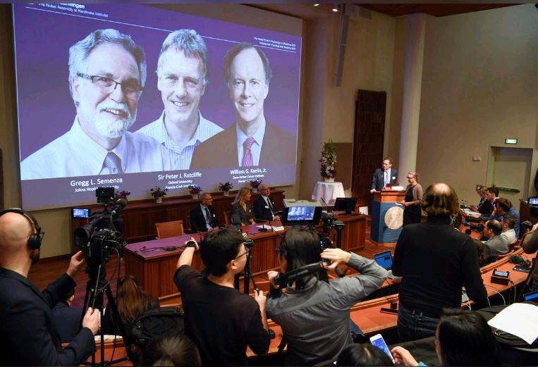 Nobel Medicine Prize won by doctors for work on cells' response to oxygen
