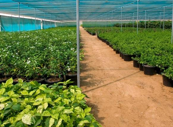 Desert Oasis for best plants