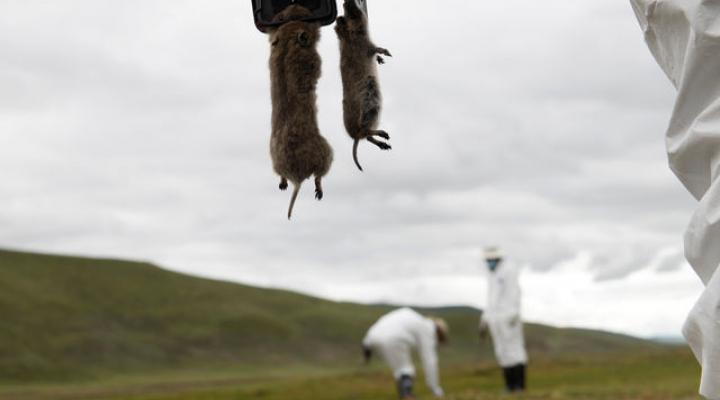Fresh case of bubonic plague in China's northern Inner Mongolia region
