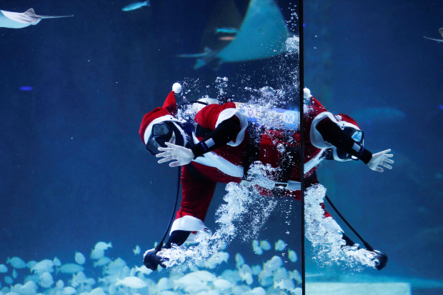 Santa Claus dives into hot climate issue in Paris aquarium