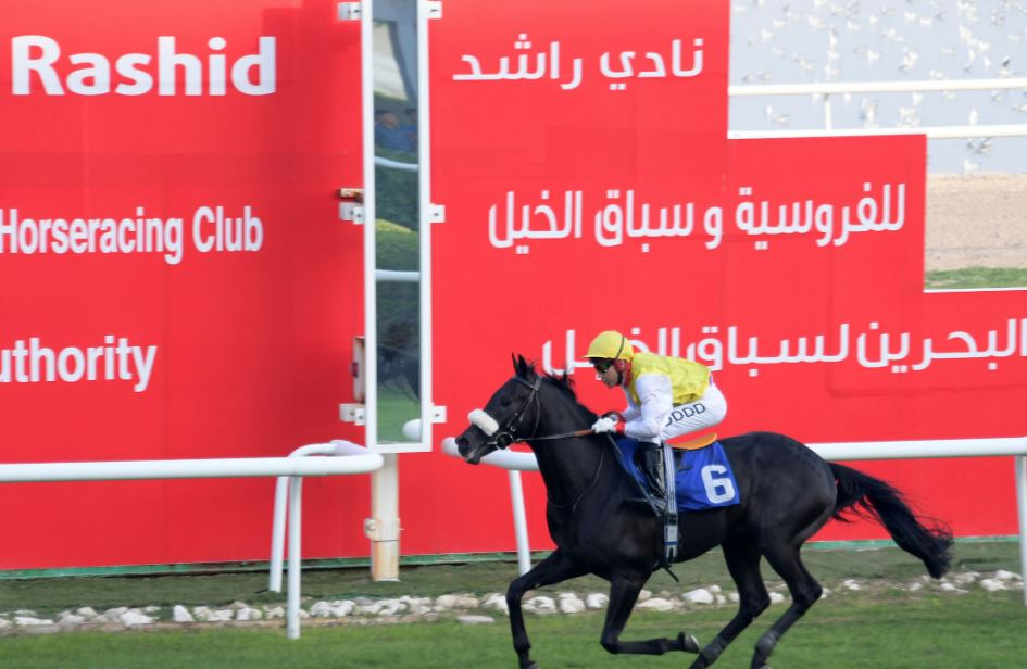 Saajid tipped to snap up Services Cup