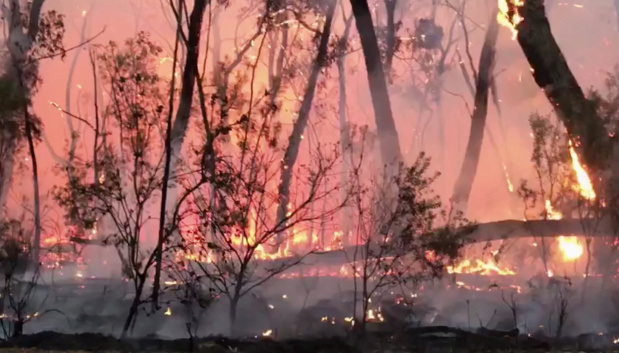 Ferries halted, alarms triggered as Sydney choked by bushfire smoke