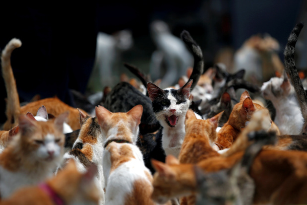 IN PICTURES: Indonesian housewife tackles homelessness for 250 feral cats