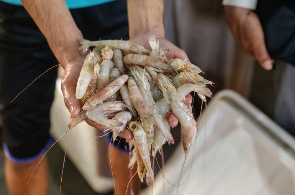 More than 2,000 fisherman caught illegally shrimping