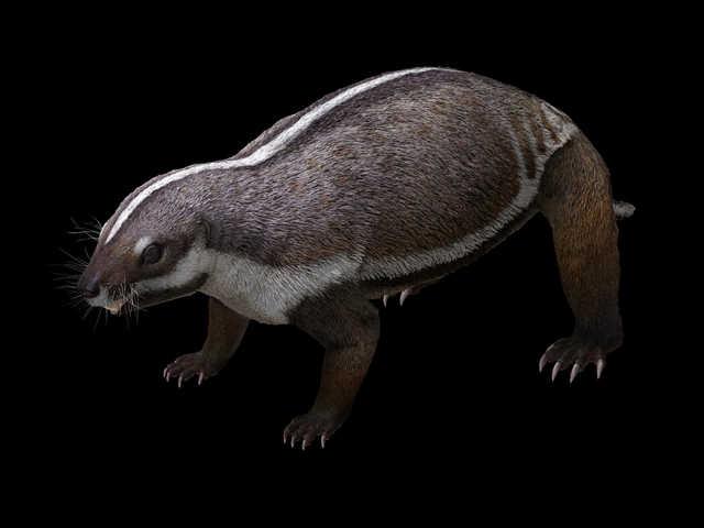 Madagascar's prehistoric 'crazy beast' sheds light on mammalian evolution