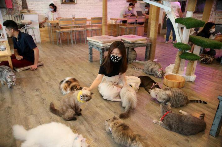 Feline 'employees' get back to work after virus shutdown