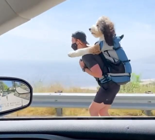 Benji the therapy dog in viral video on owner's back