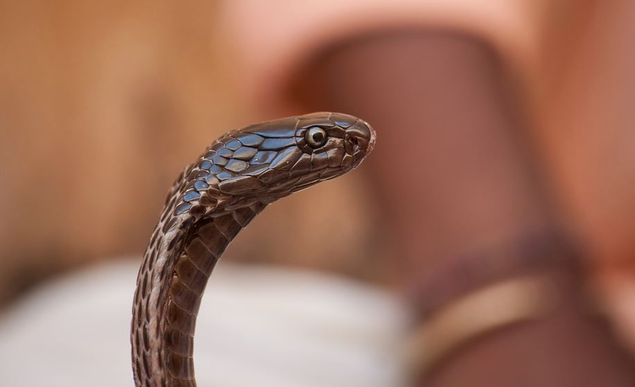 OMG: India: Man held for wife's snake-bite murder