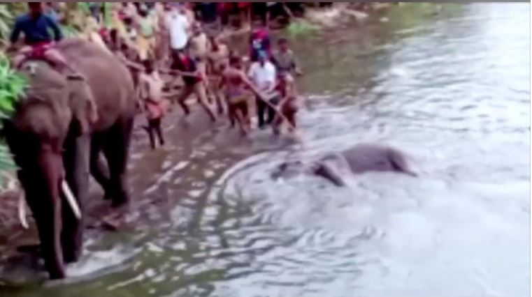 Indian elephant dies after eating fruit packed with firecracker, police investigating
